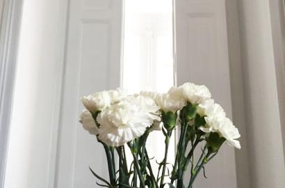 flores. como um dia de domingo...